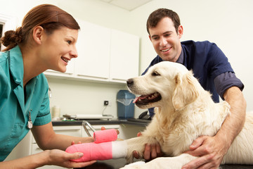 Male Veterinary Surgeon Treating Dog In Surgery