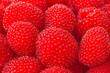 freshly picked ripe red raspberries