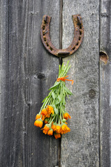 rusty horseshoe and calendula herb bunch on wall