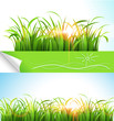 Green grass. Vector illustration