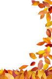 Autumn leaves falling to the ground isolated on white