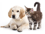 Cat and dog - 43955871
