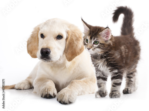 Kot i pies