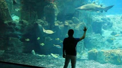 young boy watch aquairum