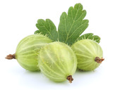 Fototapety Green gooseberry fruit with leaf on white