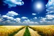 Fun sun and field full of wheat.