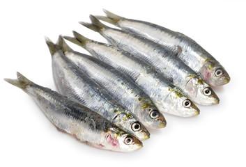 Media docena de sardinas.