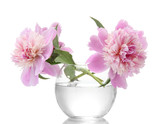 Fototapety pink peonies flowers in vase isolated on white