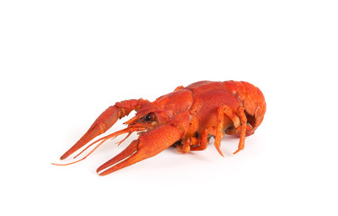 Boiled crawfish on white background