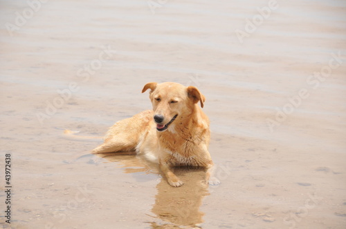 Labrador Retriever in the sea in Egypt