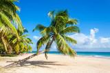 Fototapety Palm beach