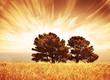 Fototapete Herbst - Hintergrund - Baum