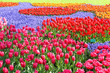 Colorful Tulips Garden Patchwork