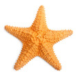 The caribbean starfish. - 43975693