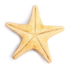 The caribbean starfish.