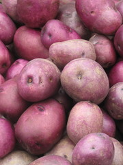 Red organic potatoes piled at farm stand