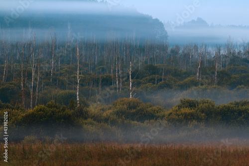 Foto op Aluminium Bos in mist Mglisty Świt na Bagnach Mazur