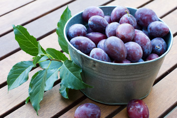 Many fresh plums  in bowl on wooden background