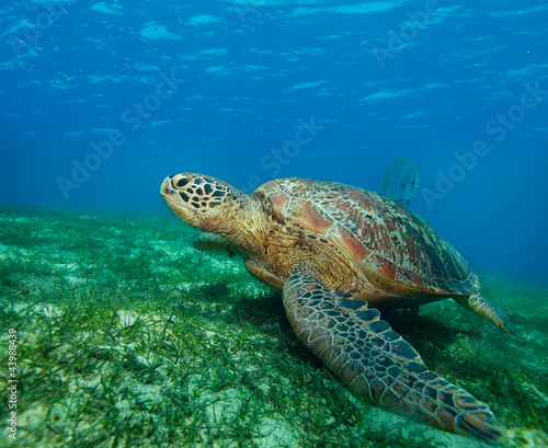 Fototapete Alge - Philippines - Meeressäuger