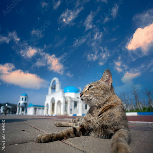 Greek Architecture with bule sky with a cat behind it