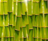 Fototapety Green bamboo grove