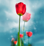 Beautiful retro style photo of tulips against sky. Growing busin
