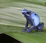 Fototapete Tier - Hell - Reptilien / Amphibien