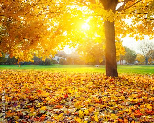 Sunny liści jesienią