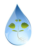 Tree sprout in water drop.