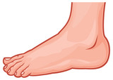 vector illustration of a foot standing