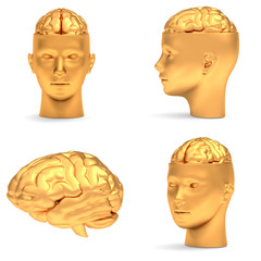 Gold head in projections