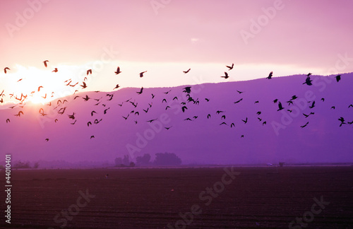 Flock of Birds Flying at the Sunset at the Golan Heights