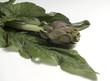 Carciofo con foglie