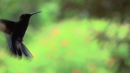 uccelli brasiliani dell'amazzonia