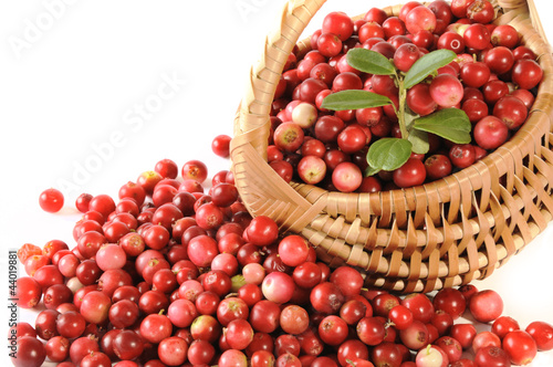 red bilberries with punnet