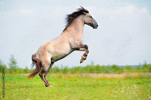 rear free horse in the field