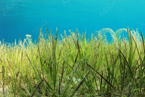 Underwater Sea Grass