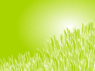 green gras background