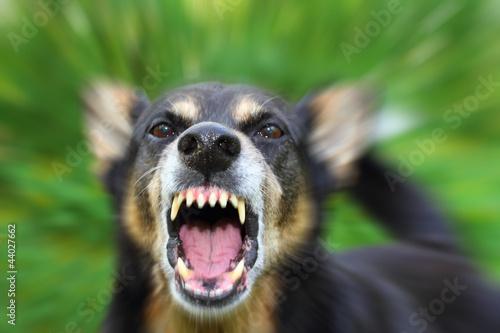 Foto op Aluminium Schapen Barking dog