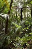 Fototapeta lasy - Rainforest - Las
