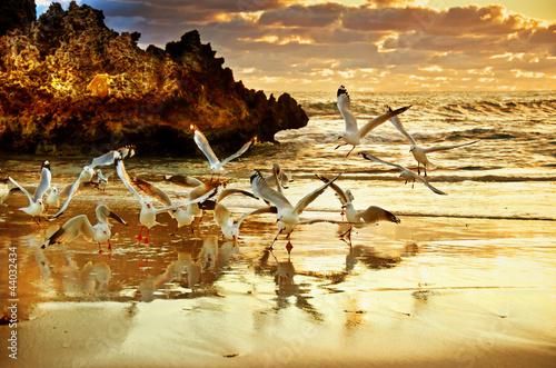 Fototapeta plaża - uroda - Wybrzeże