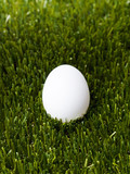 white egg standing on the green grass