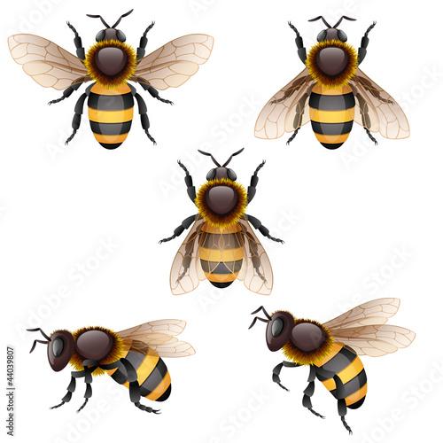 bee. - 44039807