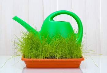 Green grass in a flowerpot and watering can