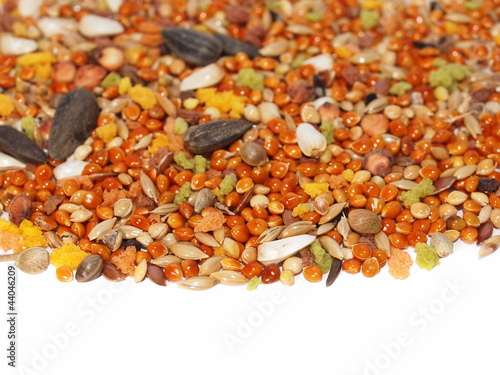 seed mixture for bird. Complete food for Lovebirds