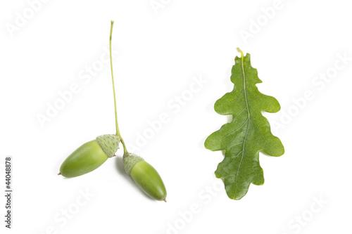 eicheln und eichenblatt