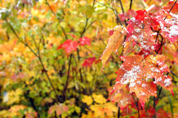 Beginning of Winter in Michigan