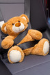 Teddy Bear in a car
