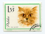 European cat on a vintage, canceled post stamp from Poland.
