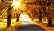 Fototapeten,herbst,wald,bäume,sonne